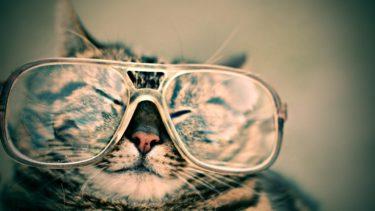 【ねこネコ猫】ねことは?猫の起源と定義のお話