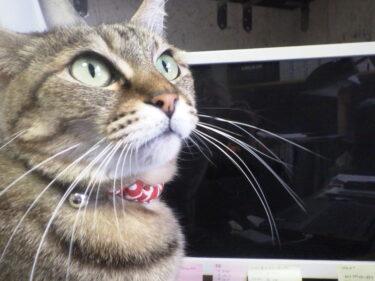 【ねこのカラダのお話】ネコの仕組みと不思議と秘密~猫の目編~